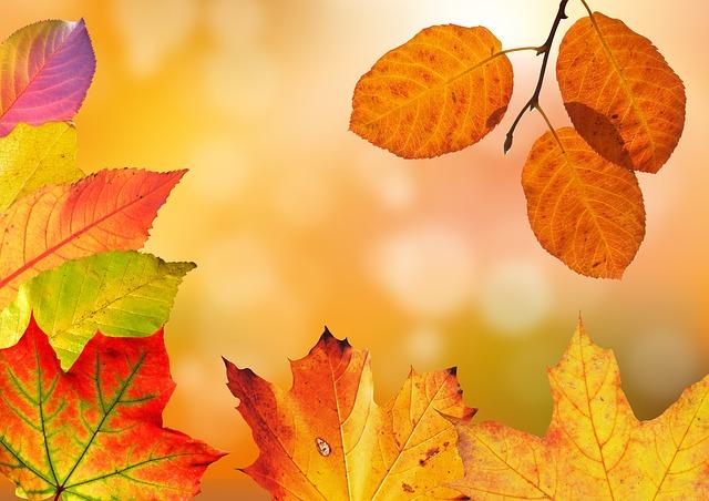 Autumn driving tips